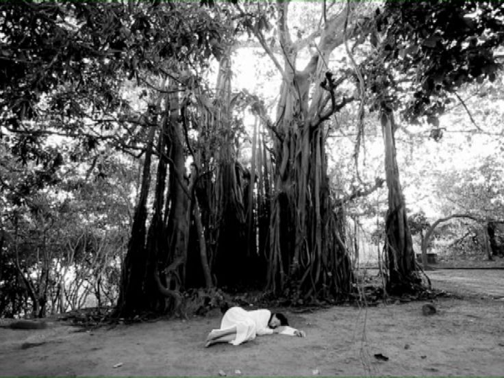 Sleeping Under the Banyan Tree